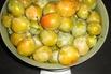 <c:out value='Mirabellen-Aprikose 'Mirakose' ® - Prunus 'Mirakose' ®' />