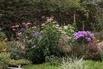<c:out value='Rotblühender Scheinsonnenhut 'Magnus' - Echinacea purpurea 'Magnus'' />