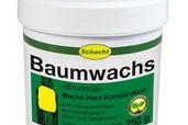Baumwachs BRUNONIA