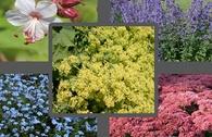 Bienen-Beet aus 10 bienenfreundlichen Stauden