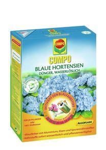 Blaue Hortensien - Compo