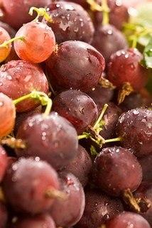 'Stachelarme' Stachelbeere 'Pax' -S- -NEU- - Ribes uva-crispa 'Pax' -S-