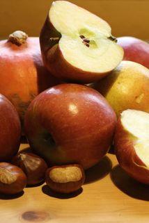 Herbstapfel 'Braeburn' - Malus 'Braeburn'