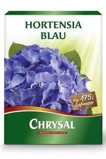Hortensia Blau - Chrysal