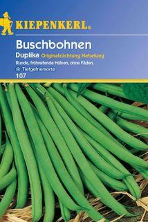 Buschbohne 'Duplika' - Kiepenkerl ®