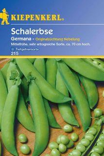 Schalerbse 'Germana' - Kiepenkerl ®