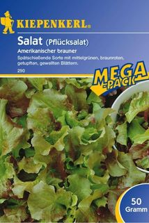 Salat Amerikanischer Brauner - Kiepenkerl ®