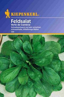 Feldsalat 'Verte de Cambrai' - Kiepenkerl ®