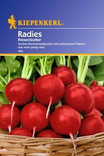 Radies 'Riesenbutter' - Kiepenkerl ®