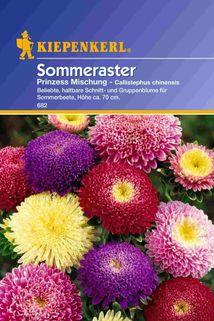 Prinzess-Aster - Kiepenkerl ®