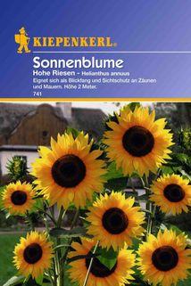 Helianthus Hohe Riesen  (Sonnenblume) gelb - Kiepenkerl ®