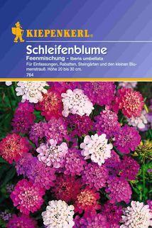 Iberis (Schleifenblume) - Kiepenkerl ®