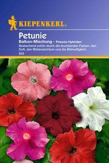 Petunia Balkonmischung - Kiepenkerl ®