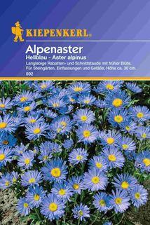 Aster alpinus (Alpenaster) hellblau - Kiepenkerl ®