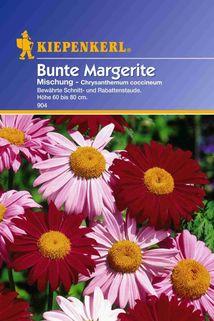 Chrysanthemum coccineum (Margerite) bunte Mischung - Kiepenkerl ®