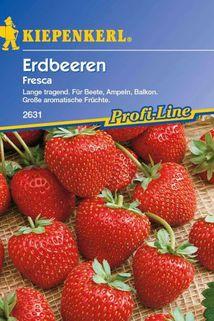Erdbeere 'Fresca' - Kiepenkerl ®