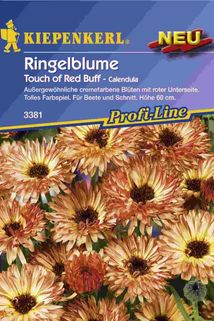 Ringelblume (Calendula) 'Touch of red Buff' - Kiepenkerl ®