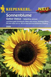Sonnenblume ' Gelber Diskus' - Kiepenkerl ®