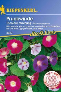 Prunkwinde 'Tricolore' Mischung - Kiepenkerl ®