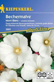 Bechermalve 'Mont Blanc' - Kiepenkerl ®