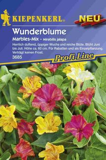 Wunderblume 'Marbles-Mix' - Kiepenkerl ®