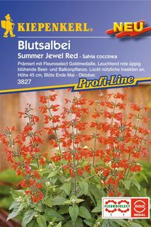 Blutsalbei 'Summer Jewel Red' - Kiepenkerl ®