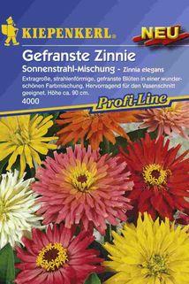 Gefranste Zinnie 'Sonnenstrahl-Mischung' - Kiepenkerl ®