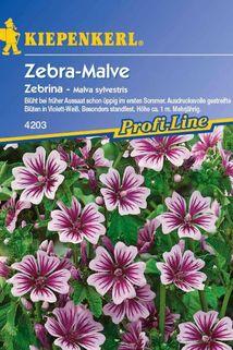 Malve 'Zebrina' - Kiepenkerl ®