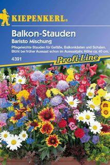 Balkonkasten Stauden-Mischung 'Baristo' - Kiepenkerl ®