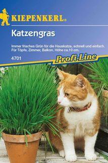 Katzengras - Kiepenkerl ®