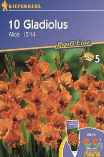Gladiolus 'Alice' - Kiepenkerl ®