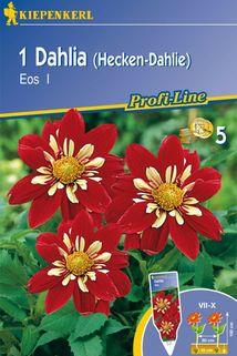 Dahlie 'Eos' - Kiepenkerl ®