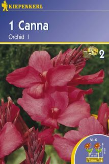 Canna 'Orchid' - Kiepenkerl ®