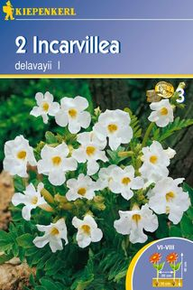 Gartengloxinie weiß - Kiepenkerl ®