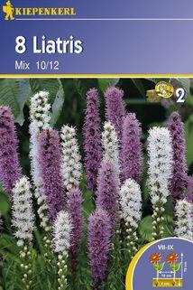 Liatris spicata 'Mix' - Kiepenkerl ®
