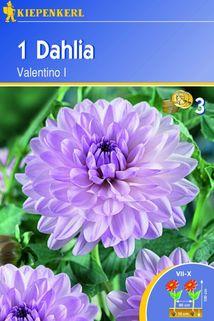 Dahlia 'Valentino' - Kiepenkerl ®
