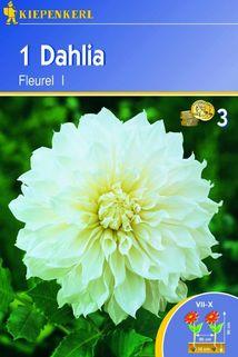 Dahlia 'Fleurel' - Kiepenkerl ®