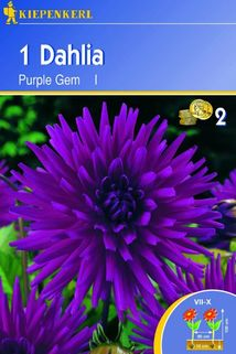 Dahlia 'Purple Gem' - Kiepenkerl ®