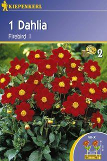 Dahlia 'Firbird' - Kiepenkerl ®