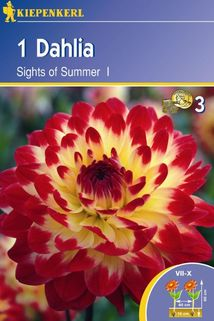 Dahlia 'Sights of Summer' - Kiepenkerl ®