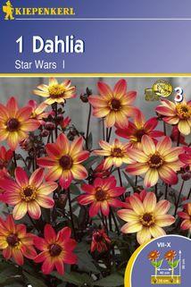 Dahlie 'Star Wars' - Kiepenkerl ®