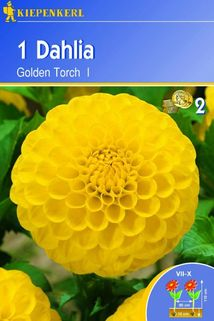 Dahlia 'Golden Torch' - Kiepenkerl ®