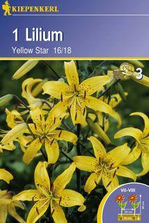 Lilium 'Yellow Star' - Kiepenkerl ®