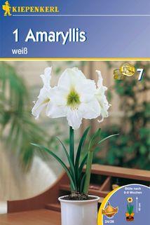 Amaryllis - Kiepenkerl ®
