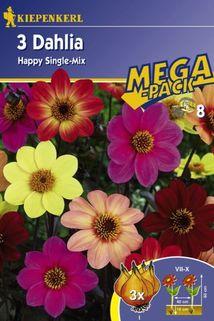 Dahlia 'Happy Single-Mix' - Kiepenkerl ®