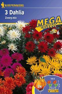 Dahlia 'Zwerg-Mix' - Kiepenkerl ®