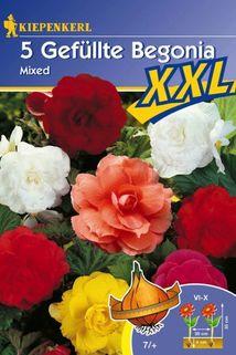 Gefüllte Begonia 'Mixed' - Kiepenkerl ®