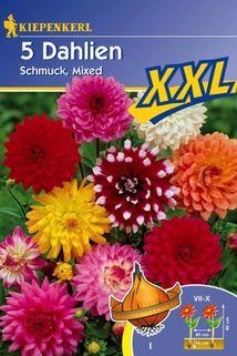 Dahlia 'Schmuck-Mix' - Kiepenkerl ®