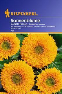 Sonnenblumen 'Helianthus gef. Riesen' - Kiepenkerl ®