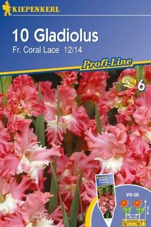 Gladiolen 'Fr. Coral Lace' - Kiepenkerl ®